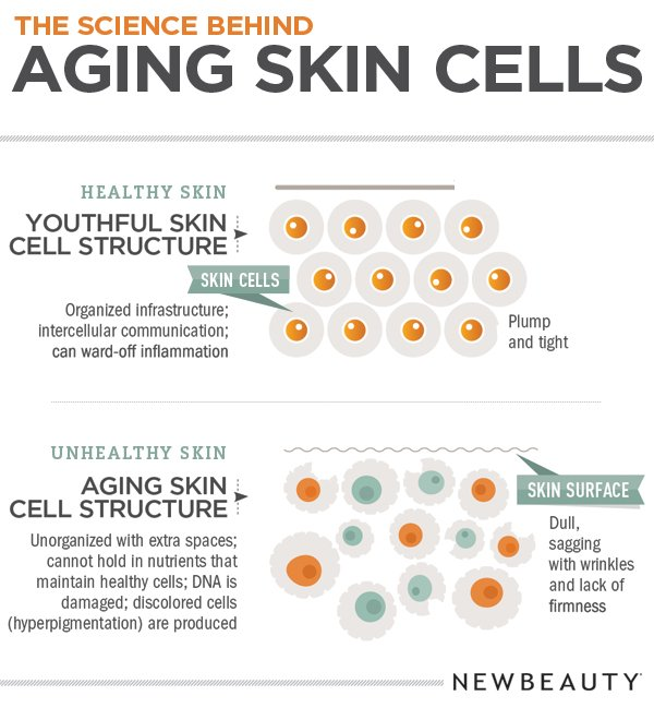 Infographic: The Science Behind Aging Skin Cells featured image